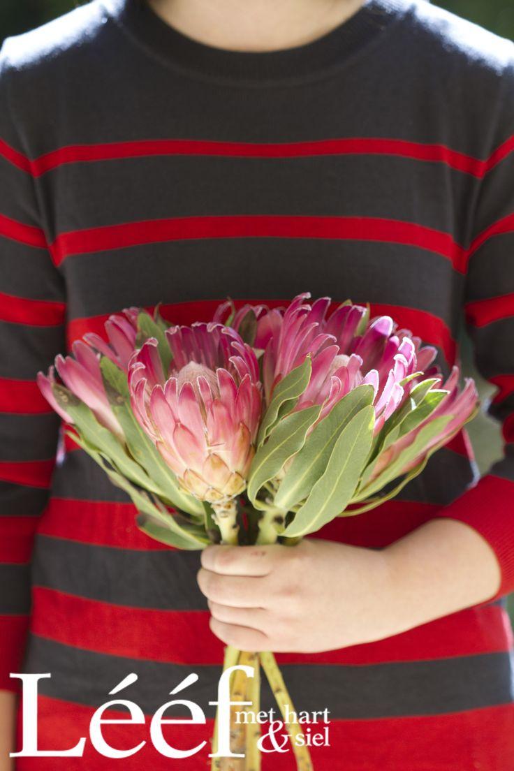 Trots SA/ Proudly South African Foto: Hanneri de Wet www.leef.co.za