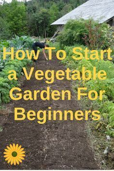 Learn how to start a vegetable garden for beginners without stressing yourself. #vegetablegardendesign