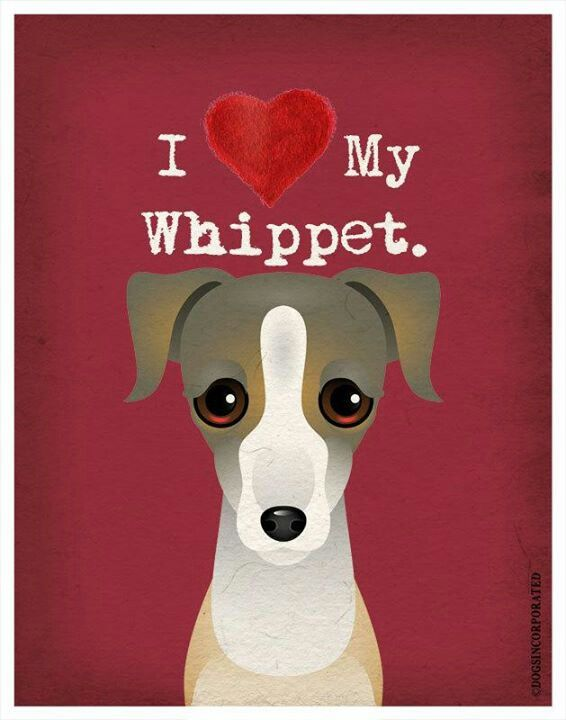 The whippet tag is breaking my heart with all the cuteness <3 <3 <3