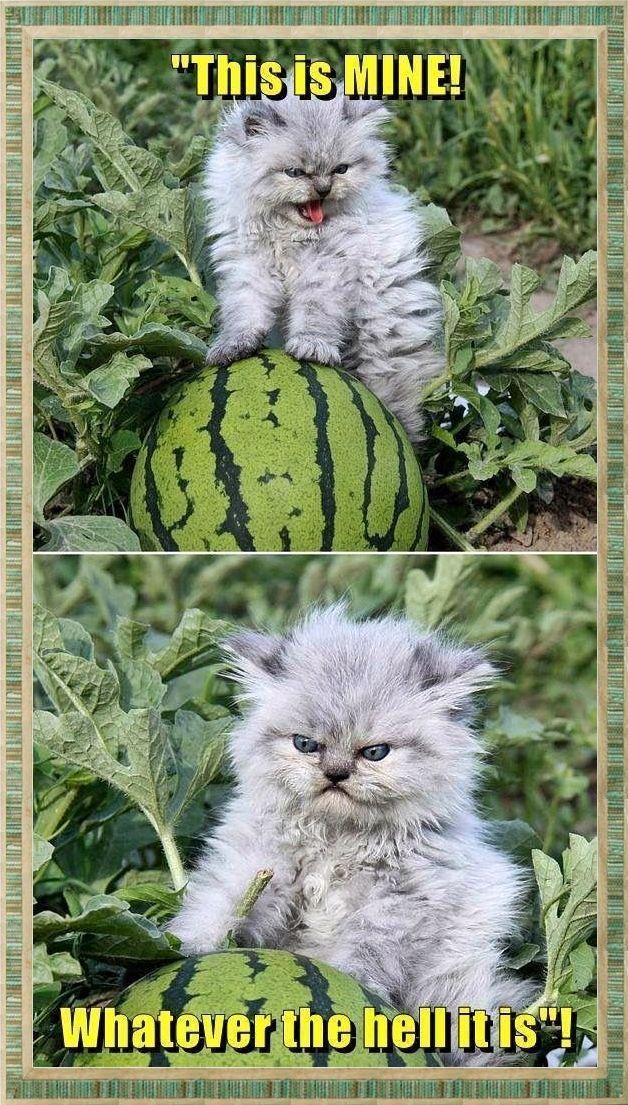 #lustige #Memes #Katzen #lustige #Memes   – animals