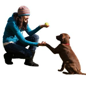 Dog training is the biggest concern for a lot of dog owners. You want your dog to be well behaved, to know how to stay around your guests and most of all, to listen to you when you ask them to.
