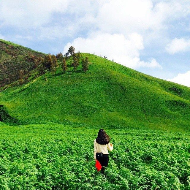 Bukit Teletubbies, Malang  Where do Teletubbies grow? - GOD