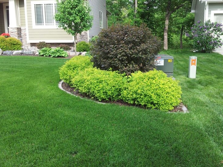 Beautiful foundation plantings utilizing spirea hosta for How to plant bushes in front of house