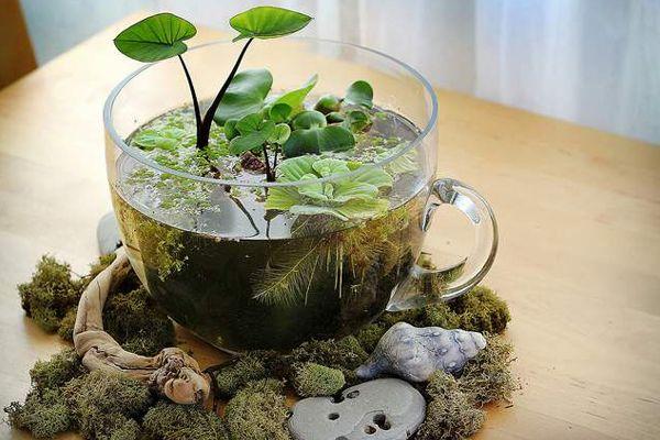 micro-jardim-vai-conquistar-você