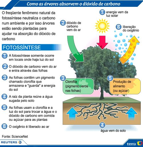 farmácia, bioquímica,fisiologia - Fotossíntese