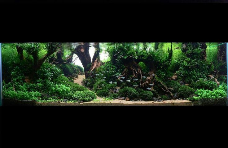 66 best aquarios images on pinterest fish tanks fish aquariums and aquarium design. Black Bedroom Furniture Sets. Home Design Ideas