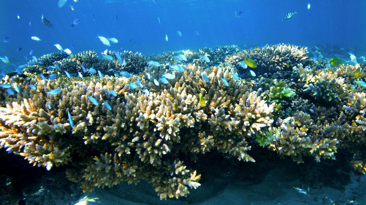 Ningaloo Reef, Exmouth, WA. © Tourism Australia