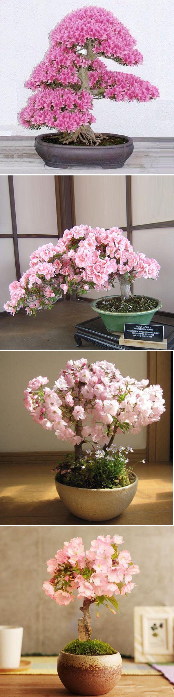US$2.39 10Pcs Rare Sakura Seeds Cherry Blossoms Seeds Garden Flower Bonsai Tree