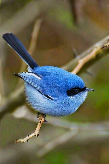 موسوعة أجمل صور طيور برية نادرة بألوان رائعة مداد الجليد Colorful Birds Bird Beautiful Birds