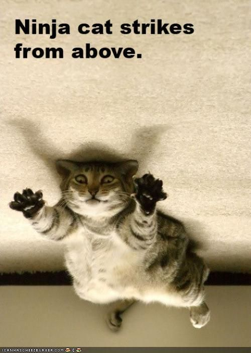 Ninja cat! Wow ;)