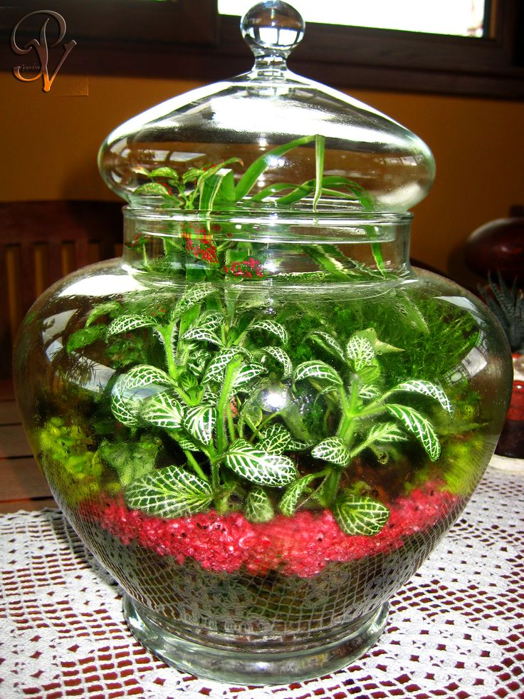 Giardino in bottiglia terrario giardini in miniatura pinterest bottiglia giardino e verde - Giardino in miniatura ...