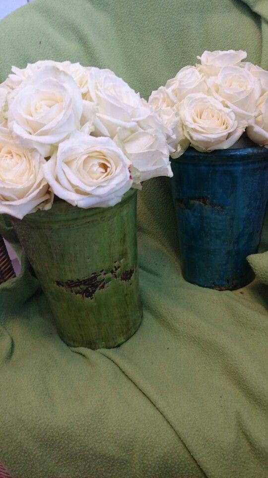 Avalance Roses
