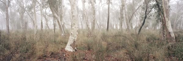 A quintessential Australian bush scene on a foggy winters morning in Canberra, Australia. Available as: Fine Art Print, ready for framing to suit your tastes an