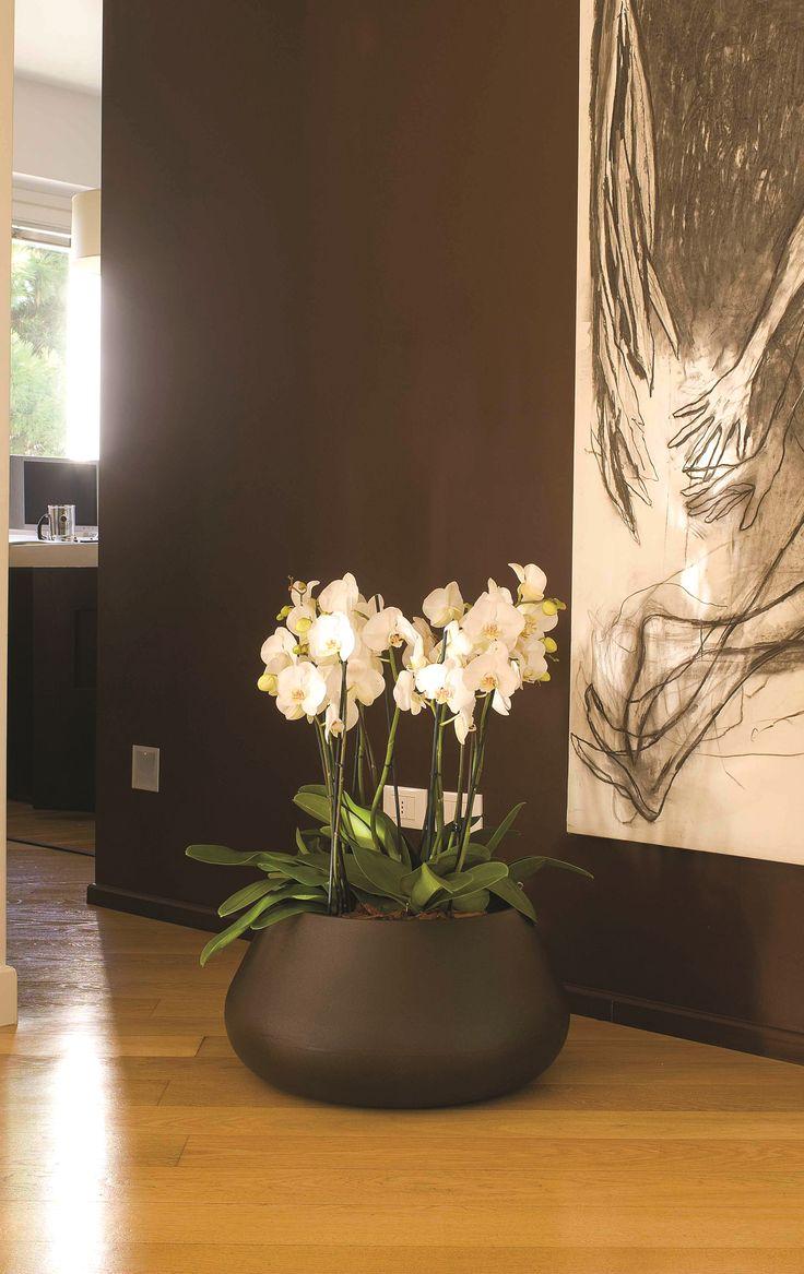 Conca Lullaby | Plart Design http://bit.ly/29a4PTx Very nice low bowl POT.