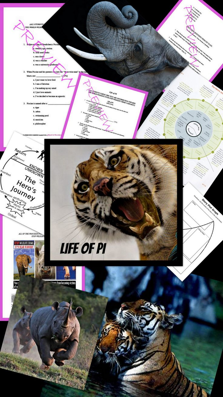 best images about teaching life of pi the life of pi entire novel is covered test essay questions and more
