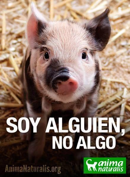 Justicia para los animales. Dile No al maltrato animal #animales #derechos #liberación #animals #rights #liberation