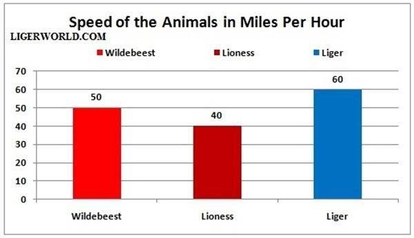 Liger vs Wildebeest - A Speed Comparison in Miles Per Hour