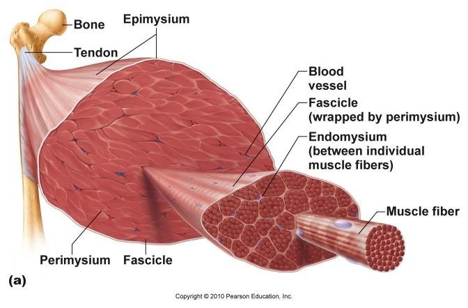 Mejores 334 imágenes de Ciencia y Salud en Pinterest | Cuerpo humano ...