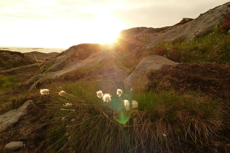 Mitternachtssonne in Norwegen Norge Vesteraalen Stoe