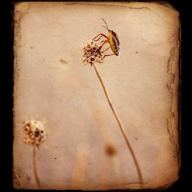 Insect on dried flower