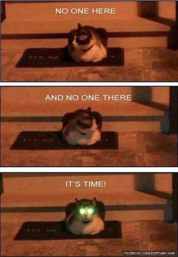Neon cat eyes