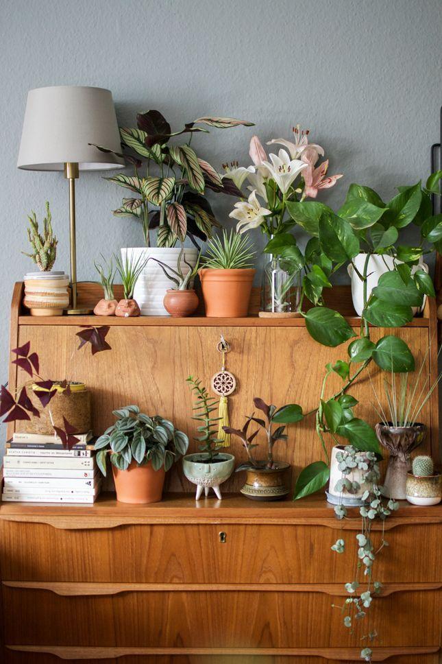 Plants Fleurs Plantes Jungle Houseplants Plantes Vertes