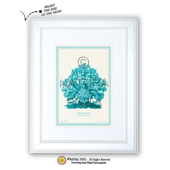 Seaweed art printCoastal printBeachy printSeaweed by naturapicta, $5.99 © NATURA PICTA All Rights Reserved