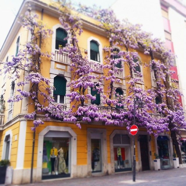 Un palazzo floreale a #Pescara