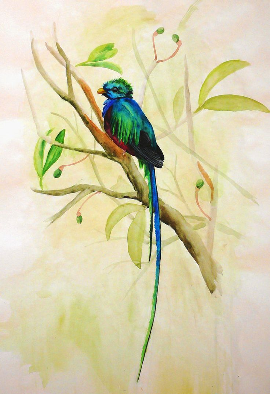 Quetzal Mayan Symbol 298 best images...