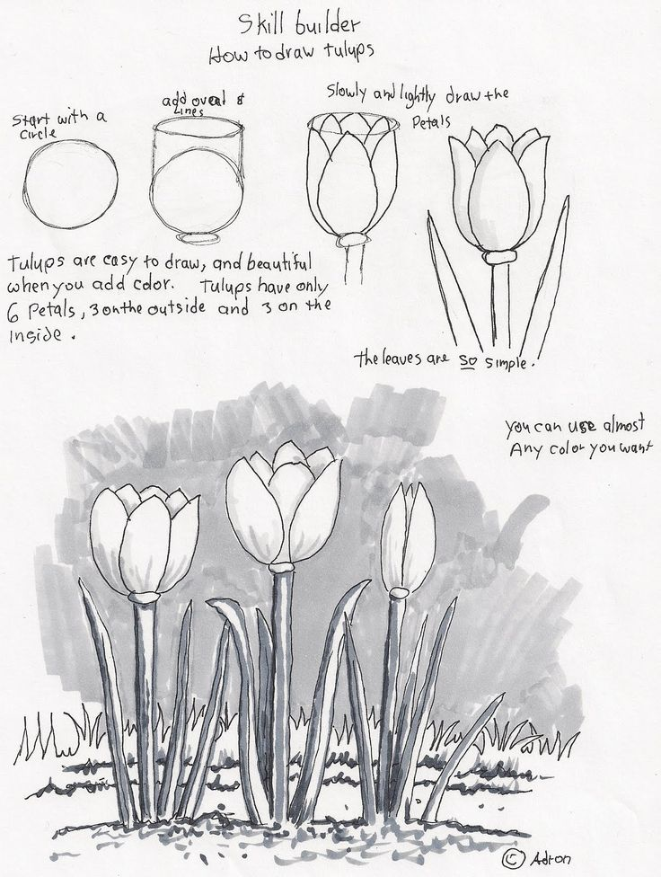 Scribble Drawing Exercise : Adron s art lesson plans how to draw tulips a beginners