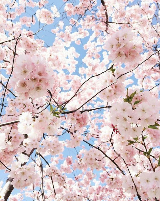 Is it spring yet? Pastel pink aesthetic