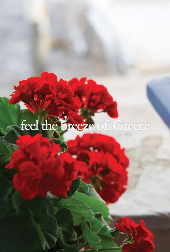 Feel the breeze of Greece.   Myrtoon Restaurant, Poulithra Greece. © Vicky Lafazani - Installation text: Roligraphics / Graphic Designer
