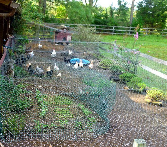 Ukázka klasického výběhu pro slepice, když máte na zahradě dost místa. Plné oplocení je praktické proti dravcům a šelmám.