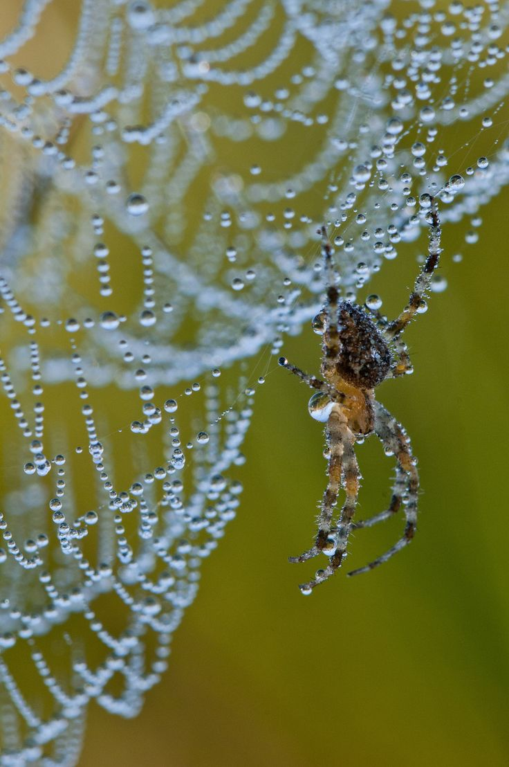 1141 best Spider World images on Pinterest | Spiders, Canvases and ...