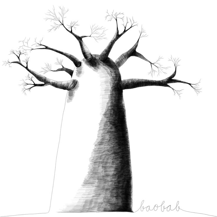 Originalni obraz Baobab 315 kč