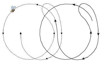 Circle & Waggle: HoneyBee Dance