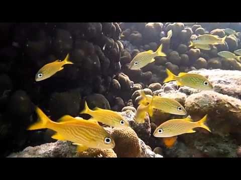Panasonic LUMIX TS25 waterproof camera coral reef demo video - with ALZO Snorkel-pod - YouTube