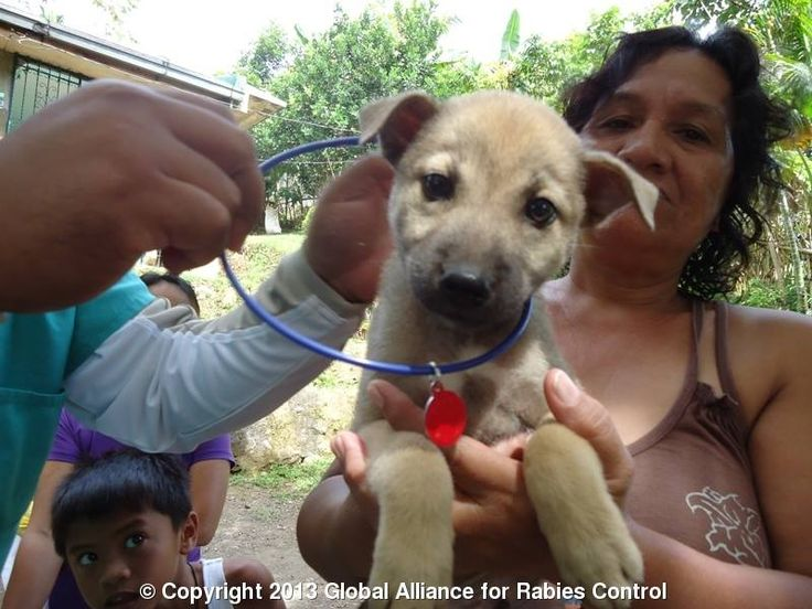 Can Dogs Die From Rabies Naturally