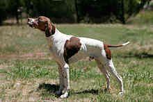 Perro de caza - Wikipedia, la enciclopedia libre