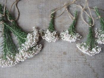 ライスフラワー ドライフラワー dryflower|FLEURI blog