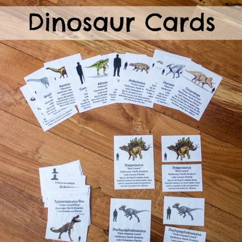 FREE Dinosaur Cards: These dinosaur cards feature information about 12 of the most well-known dinosaurs including their size relative to humans. Montessori-inspired, these 5-part cards can be used for hands-on, independent learning or in a memory-style matching game.