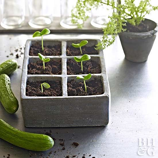 Vegetables are one of the most prized gems that our garden can give us every year. Give your vegetables the love that they deserve and earn a higher yield by working through this checklist. #vegetablegardening #vegetablegarden #gardening #growvegetables