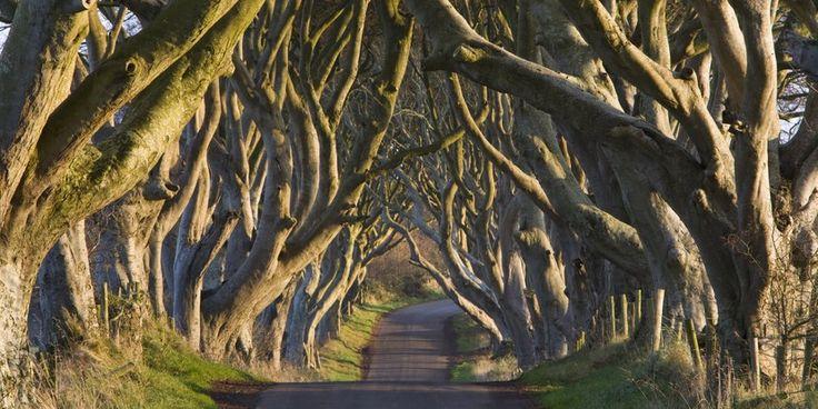Los más hermosos túneles de árboles del mundo