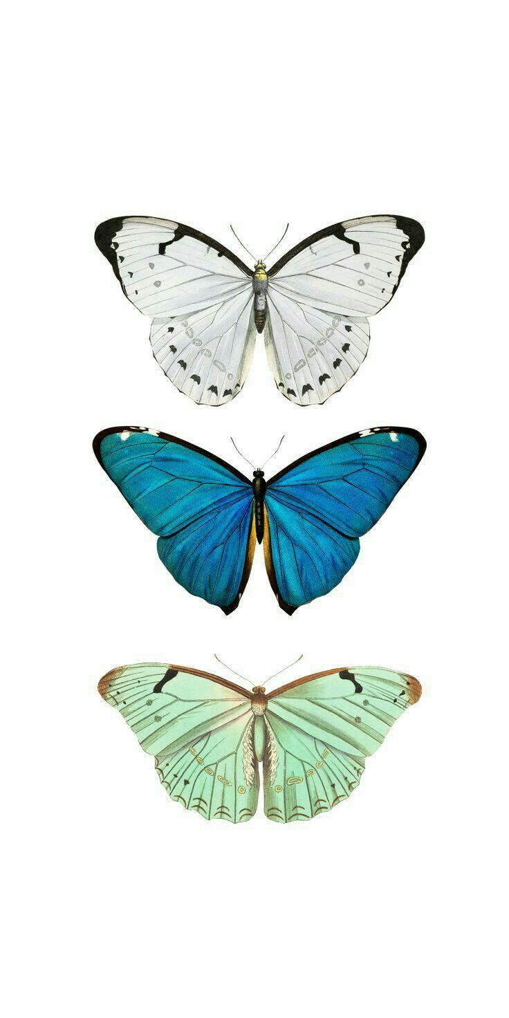 Pin By M O N Y On W A L L P A P E R Butterfly Wallpaper Iphone