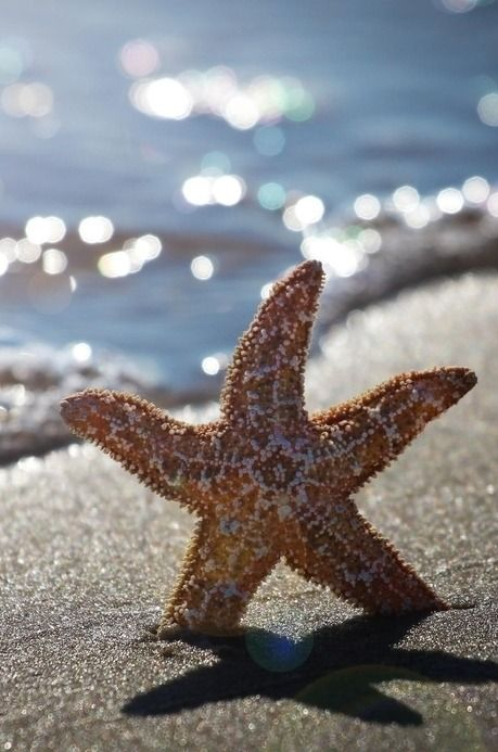 heaven-ly-mind:  Summer starfish in ACbyMichel Bellemareon 500px