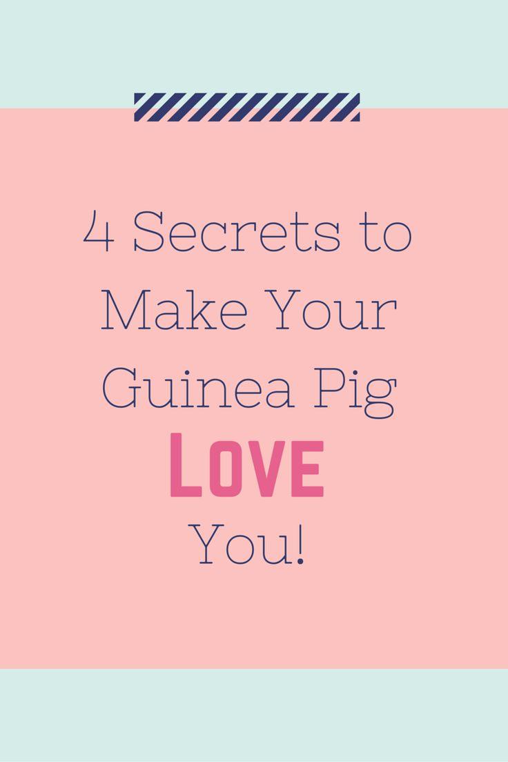 best 25 guinea pigs ideas on pinterest cute guinea pigs