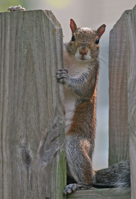 """""""Every man is surrounded by a neighborhood of voluntary spies.""""  ~Jane Austen   #squirrel"""
