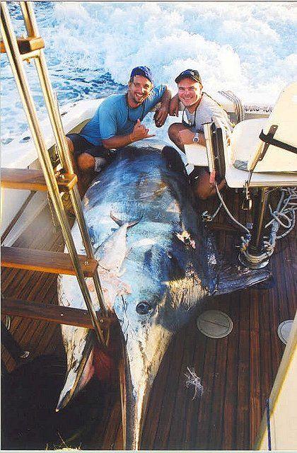 Photo of black marlin weighing 1386 lbs - Great Barrier Reef, Australia