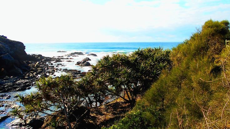 Port Macquarie: track between Shelly and Miner's Beaches