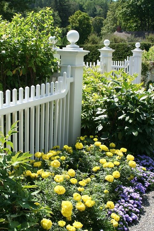 love a picket fence and love happy yellow flowers mixed with deep blue and pale